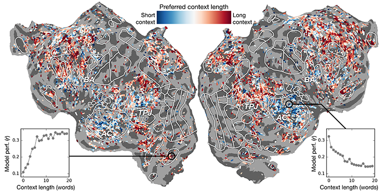 Context length preference across cortex. An index of context length preference is computed for each voxel in one subject and projected onto that subject's cortical surface. Voxels shown in blue are best modeled using short context, while red voxels are best modeled with long context.