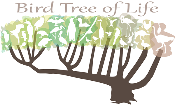 Bird Tree of Life, Tree with stylized white birds amongst the leaves.