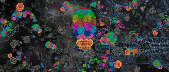 Still from a video clip produced by the Computational Visualization Center at The University of Texas at Austin showing biomolecular machines manufacturing proteins. [Click image to see entire animation.]
