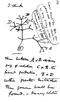 "Charles Darwin's first diagram of an evolutionary tree from his ""First Notebook on Transmutation of Species"" (1837) is on view at the American Museum of Natural History in New York City."