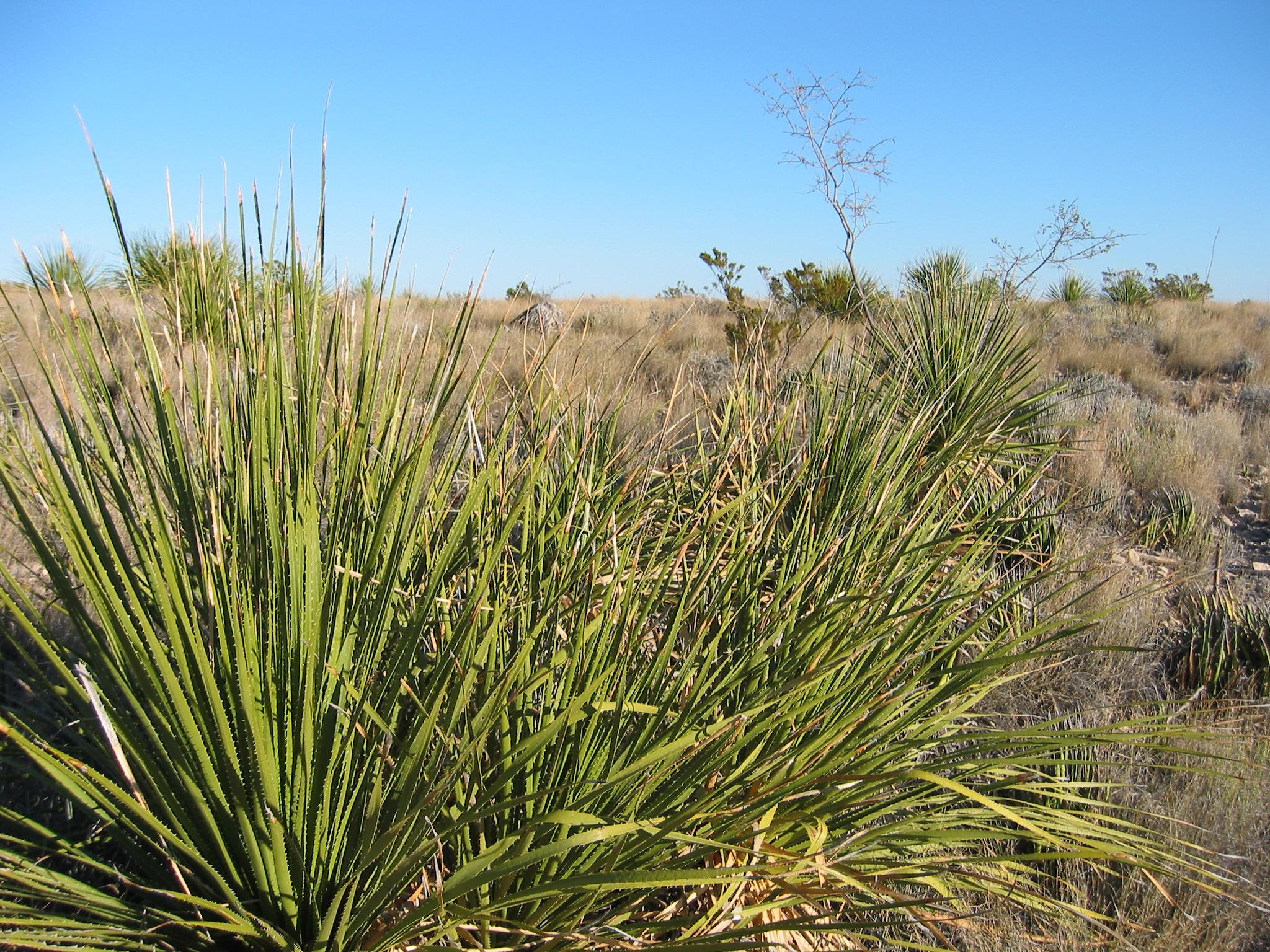 Растения пустыни фото с названиями - 5058